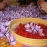 Safranbolu Safran Çiçeği Hasadı Turu / 1 Gece Otel Konaklaması