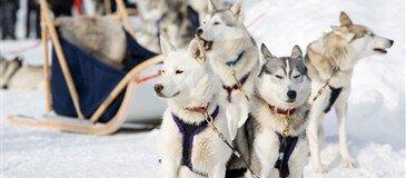 Kuzey Işıkları Lapland Turu Tüm Ekstra Turlar Dahil 3 Gece 4 Gün