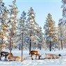 Lapland - Kuzey Işıkları Turu İzmir Hareket Sömestre Özel